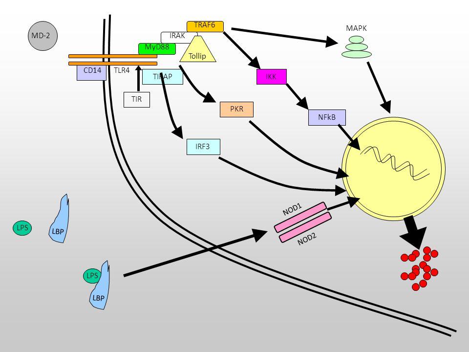 Sitokinler TNF; apoptosis, sitokin, NO IL1; genel uyarı, kalp baskılayıcı IL6; lenfosit uyarısı, akut faz prot.