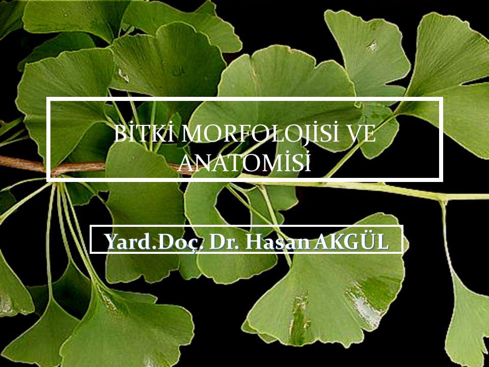 Floem öz kollarını oluşturan hücreler odunsu bitkilerde genellikle radyal yönde uzamış prizmalar halinde, otsu bitkilerde ise kübik veya küresel şekilde olurlar.