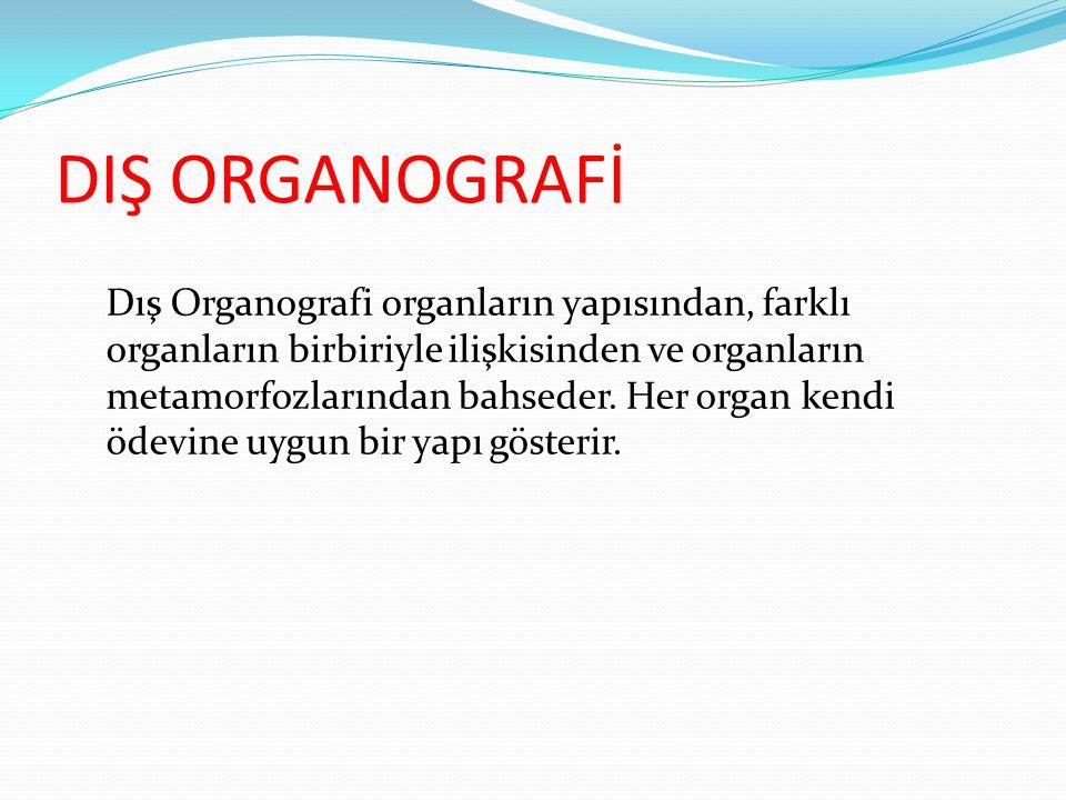 DIŞ ORGANOGRAFİ Dış Organografi organların yapısından, farklı organların birbiriyle ilişkisinden ve organların metamorfozlarından bahseder. Her organ