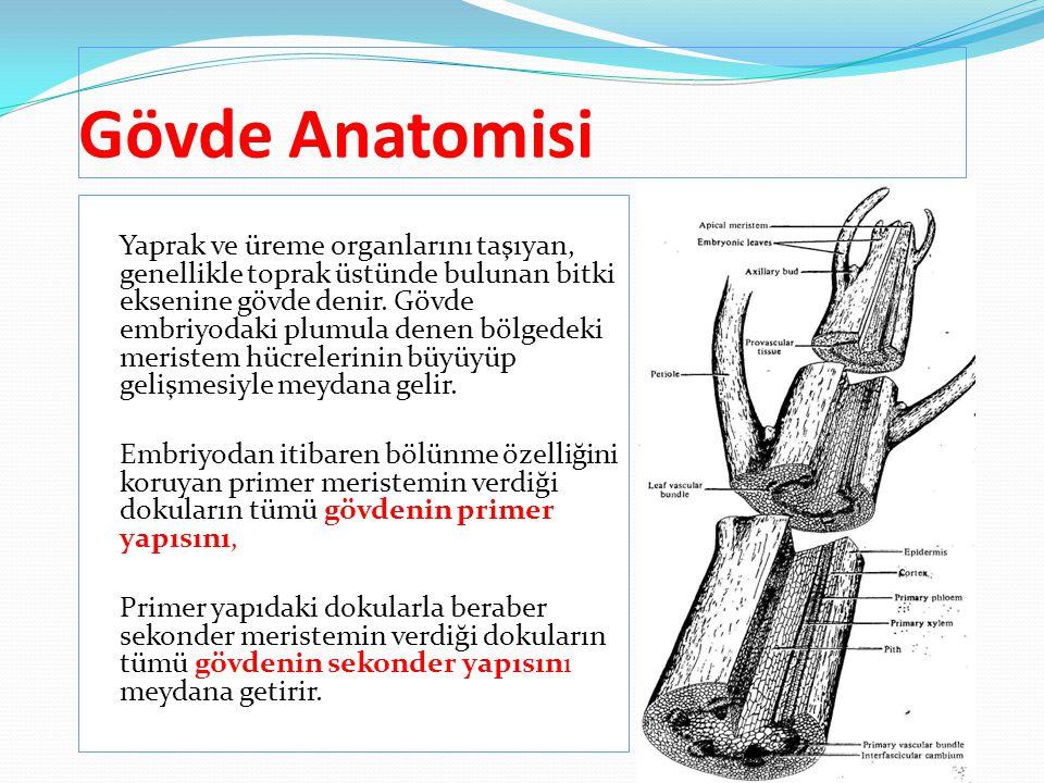 Gövde Anatomisi Yaprak ve üreme organlarını taşıyan, genellikle toprak üstünde bulunan bitki eksenine gövde denir. Gövde embriyodaki plumula denen böl