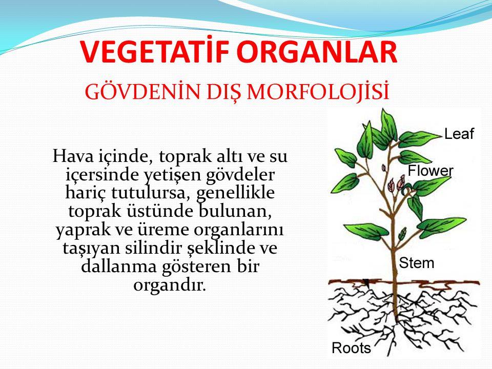 Gövdenin en basit şekli kara yosunlarında görülürse de iletim demetlerine sahip gerçek gövdelere Pteridofitler (eğreltiler)'de ve daha gelişmiş haline Spermatofitler (tohumlu bitkiler)'de rastlanır.