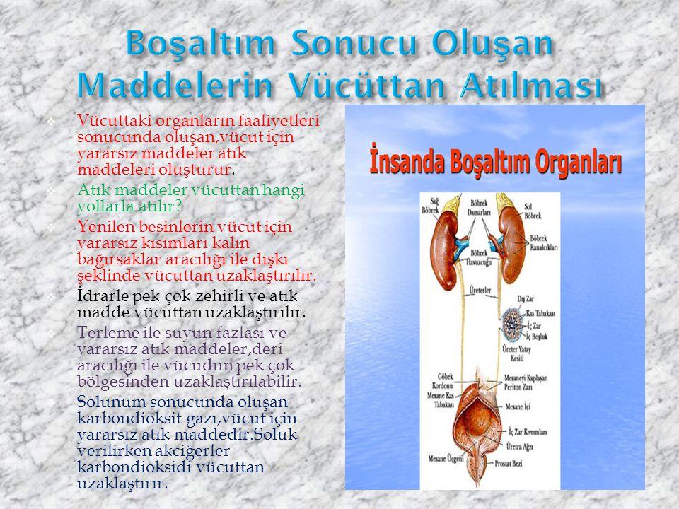 Sindirilmiş besinler ve havdan alınan oksijen,kan yoluyla ilgili yapı ve organlara taşınır.Bu maddelerin vücudumuzda kullanılması sonucunda birtakım a