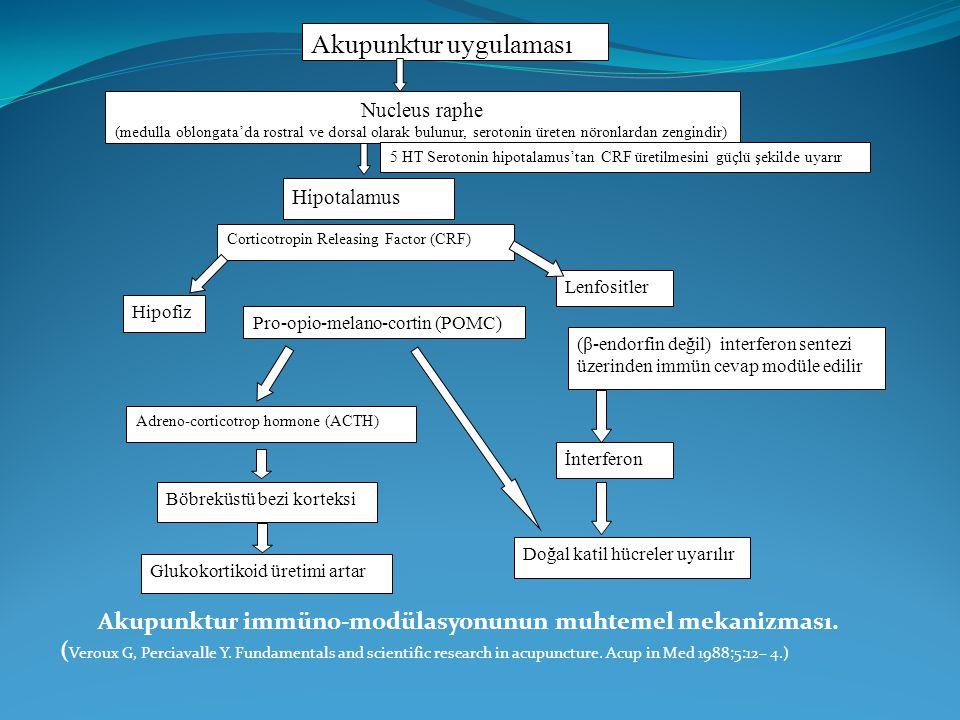 Akupunktur immüno-modülasyonunun muhtemel mekanizması. ( Veroux G, Perciavalle Y. Fundamentals and scientific research in acupuncture. Acup in Med 198