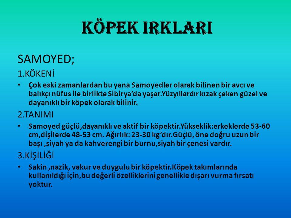 DEVAMI… PİSİ PİSİ OTU Pisi otu Türkiye'de Mayıs aylarında ortaya çıkmaya başlar.