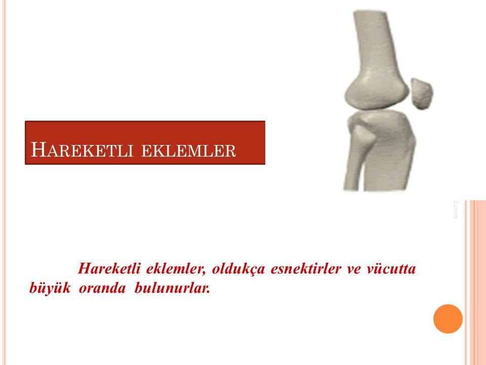 H AREKETLI EKLEMLER Hareketli eklemler, oldukça esnektirler ve vücutta büyük oranda bulunurlar.