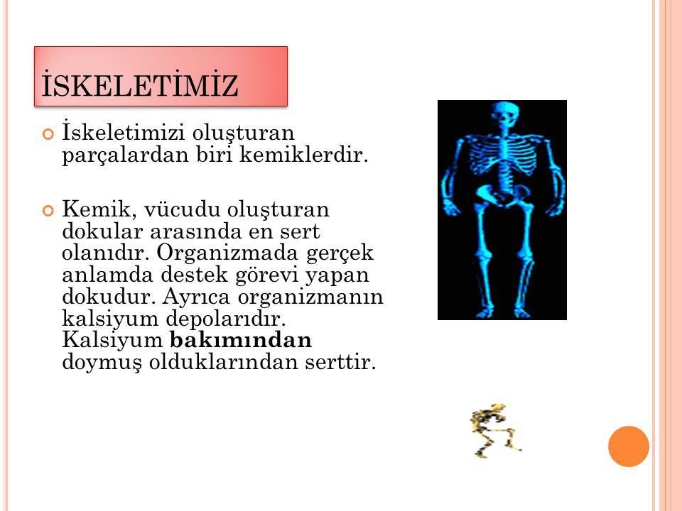 Farklı şekillerde bulunan kemikler hareket etmemizi sağlar.