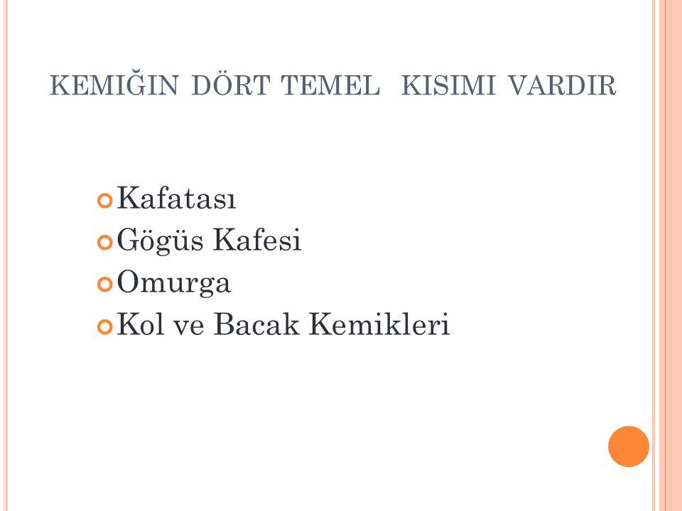 KEMIĞIN DÖRT TEMEL KISIMI VARDIR Kafatası Gögüs Kafesi Omurga Kol ve Bacak Kemikleri www.egitimcininadresi.com