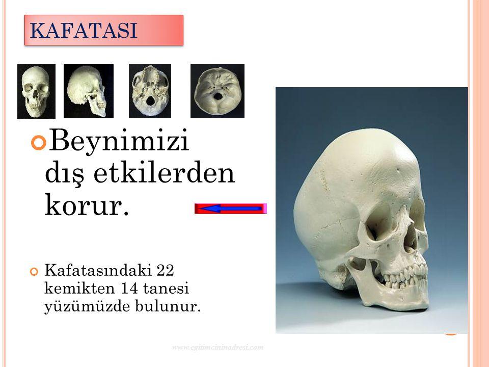 GÖĞÜS KAFESİ Kalp ve akciğerlerimizi dış etkilerden korur. www.egitimcininadresi.com