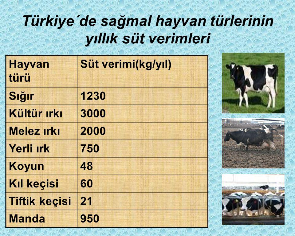 Türkiye´de sağmal hayvan türlerinin yıllık süt verimleri Hayvan türü Süt verimi(kg/yıl) Sığır1230 Kültür ırkı3000 Melez ırkı2000 Yerli ırk750 Koyun48 Kıl keçisi60 Tiftik keçisi21 Manda950