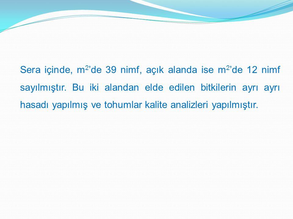 Sera içinde, m 2 'de 39 nimf, açık alanda ise m 2 'de 12 nimf sayılmıştır.