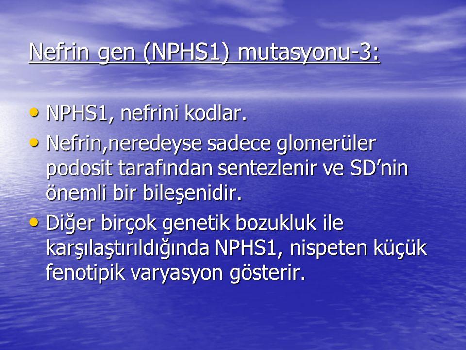 Nefrin gen (NPHS1) mutasyonu-3: NPHS1, nefrini kodlar.