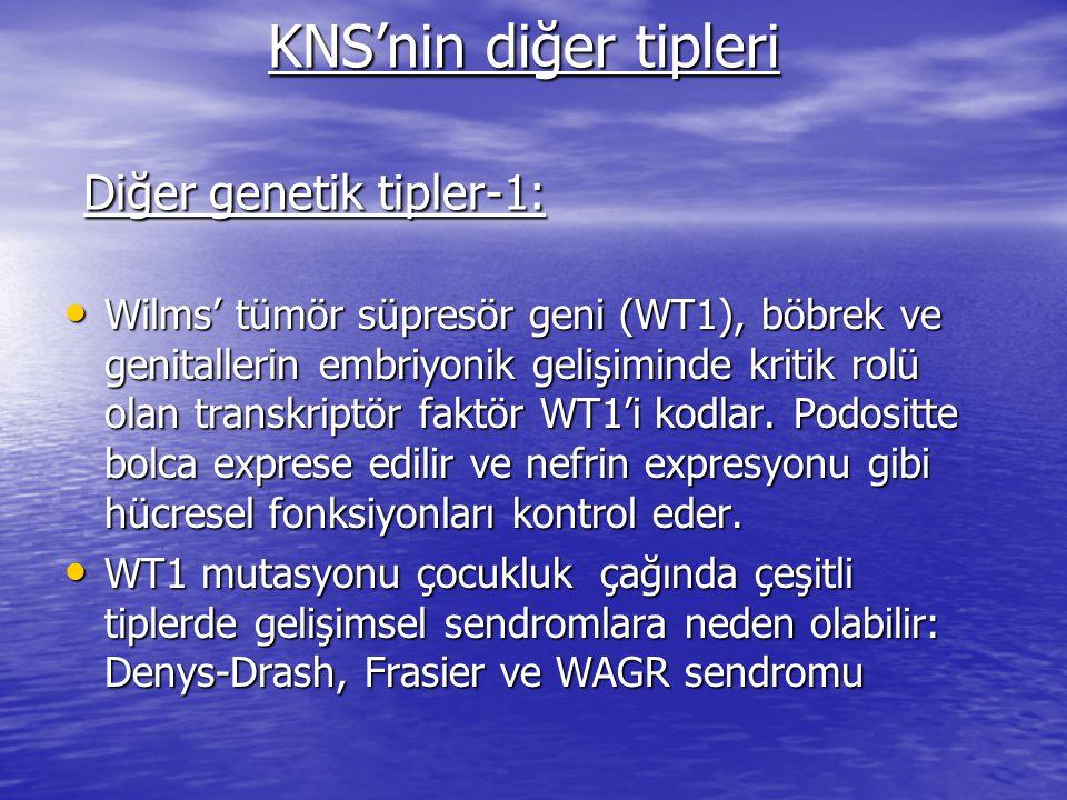 KNS'nin diğer tipleri Diğer genetik tipler-1: KNS'nin diğer tipleri Diğer genetik tipler-1: Wilms' tümör süpresör geni (WT1), böbrek ve genitallerin embriyonik gelişiminde kritik rolü olan transkriptör faktör WT1'i kodlar.