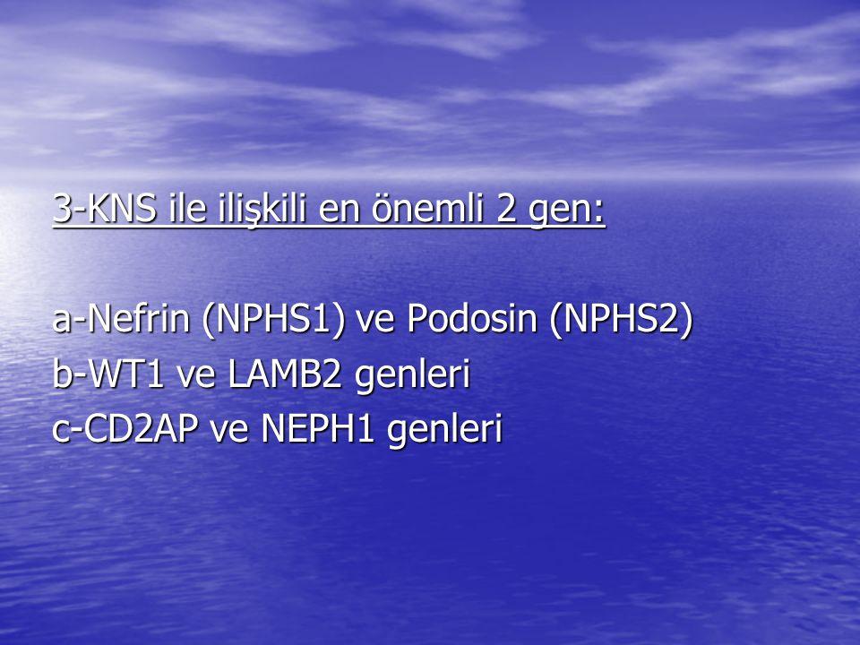 3-KNS ile ilişkili en önemli 2 gen: a-Nefrin (NPHS1) ve Podosin (NPHS2) b-WT1 ve LAMB2 genleri c-CD2AP ve NEPH1 genleri