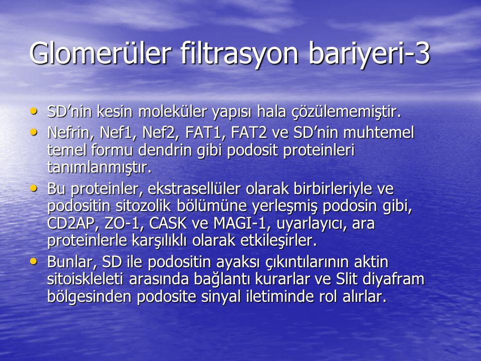 Glomerüler filtrasyon bariyeri-3 SD'nin kesin moleküler yapısı hala çözülememiştir.