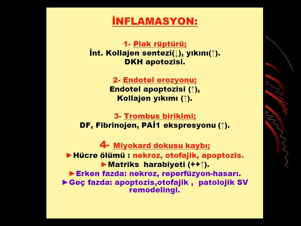İNFLAMASYON: 1- Plak rüptürü; İnt. Kollajen sentezi(↓), yıkını(↑). DKH apotozisi. 2- Endotel erozyonu; Endotel apoptozisi (↑), Kollajen yıkımı (↑). 3-