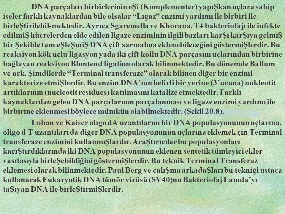 DNA parçaları birbirlerinin eŞi (Komplementer) yapıŞkan uçlara sahip iseler farklı kaynaklardan bile olsalar Lıgaz enzimi yardımı ile birbiri ile birleŞtirilebil-mektedir.