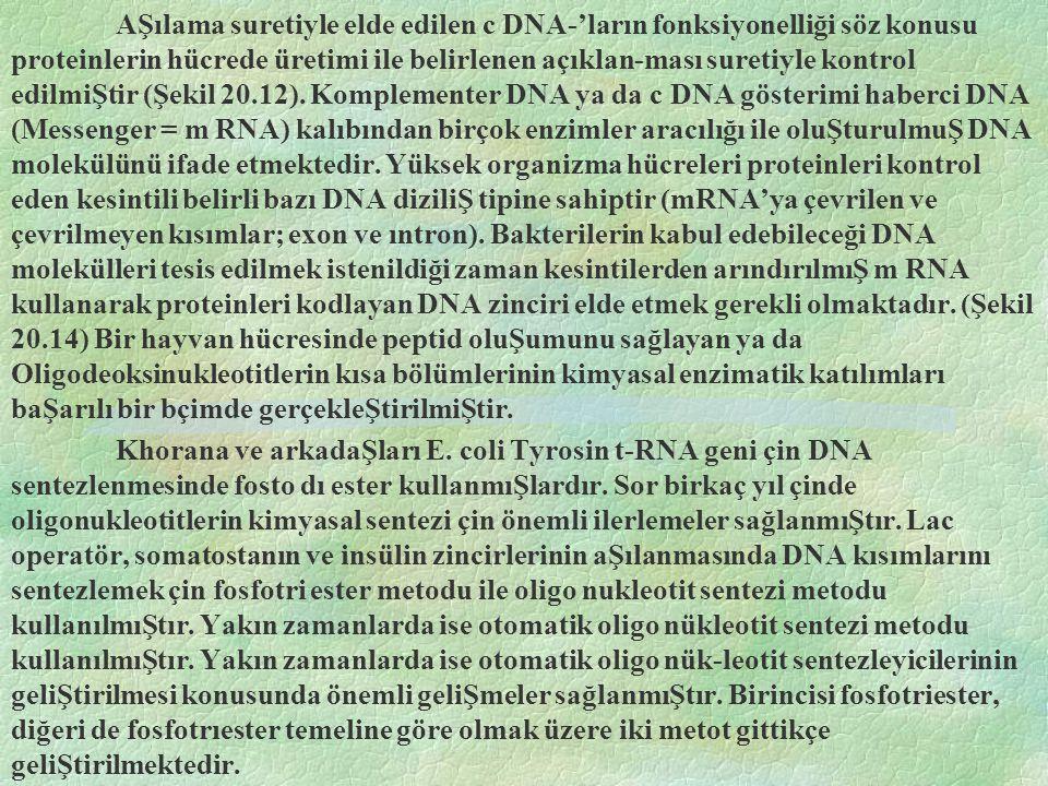 AŞılama suretiyle elde edilen c DNA-'ların fonksiyonelliği söz konusu proteinlerin hücrede üretimi ile belirlenen açıklan-ması suretiyle kontrol edilmiŞtir (Şekil 20.12).