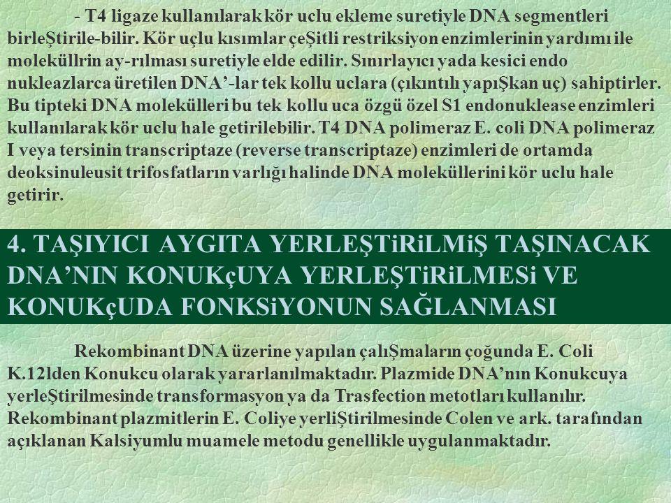 4. TAŞIYICI AYGITA YERLEŞTiRiLMiŞ TAŞINACAK DNA'NIN KONUKçUYA YERLEŞTiRiLMESi VE KONUKçUDA FONKSiYONUN SAĞLANMASI - T4 ligaze kullanılarak kör uclu ek