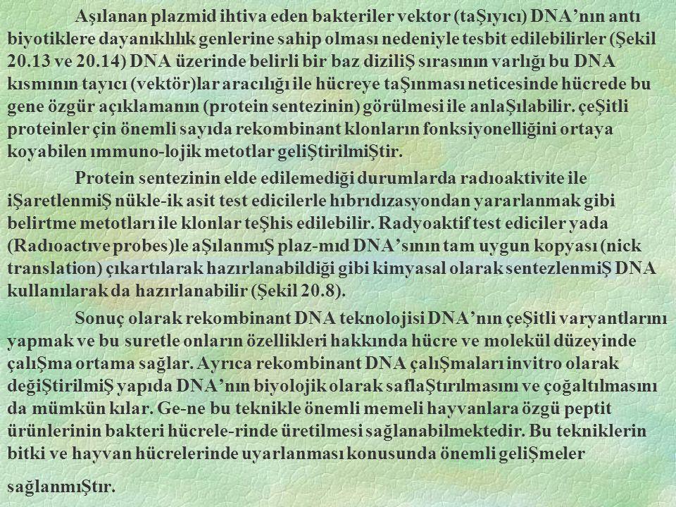 Aşılanan plazmid ihtiva eden bakteriler vektor (taŞıyıcı) DNA'nın antı biyotiklere dayanıklılık genlerine sahip olması nedeniyle tesbit edilebilirler (Şekil 20.13 ve 20.14) DNA üzerinde belirli bir baz diziliŞ sırasının varlığı bu DNA kısmının tayıcı (vektör)lar aracılığı ile hücreye taŞınması neticesinde hücrede bu gene özgür açıklamanın (protein sentezinin) görülmesi ile anlaŞılabilir.
