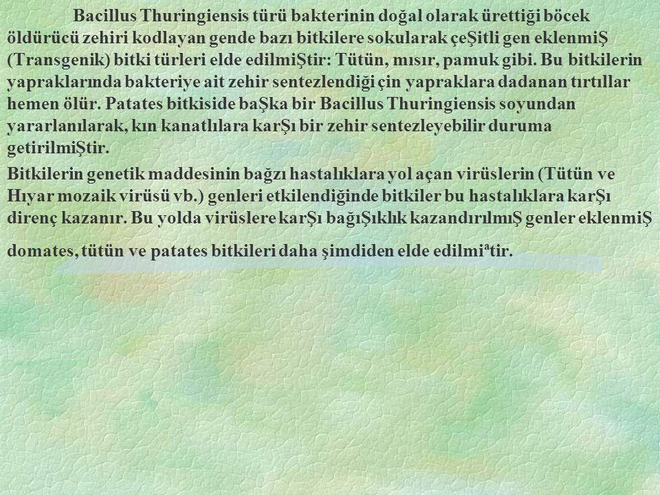 Bacillus Thuringiensis türü bakterinin doğal olarak ürettiği böcek öldürücü zehiri kodlayan gende bazı bitkilere sokularak çeŞitli gen eklenmiŞ (Transgenik) bitki türleri elde edilmiŞtir: Tütün, mısır, pamuk gibi.