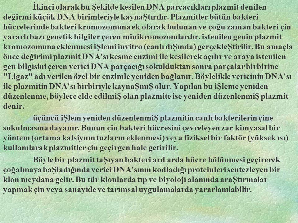 İkinci olarak bu Şekilde kesilen DNA parçacıkları plazmit denilen değirmi küçük DNA birimleriyle kaynaŞtırılır.