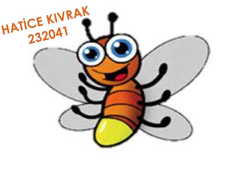 HATİCE KIVRAK 232041