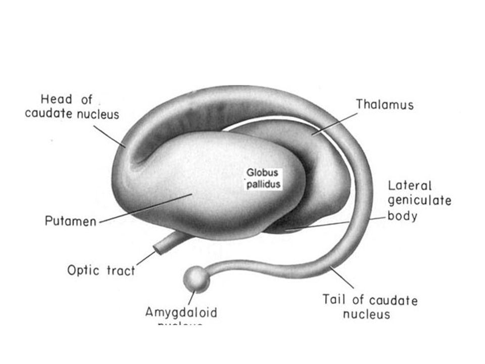 Nöronlar soma, dentrit akson denilen üç ana kısımdan oluşur.