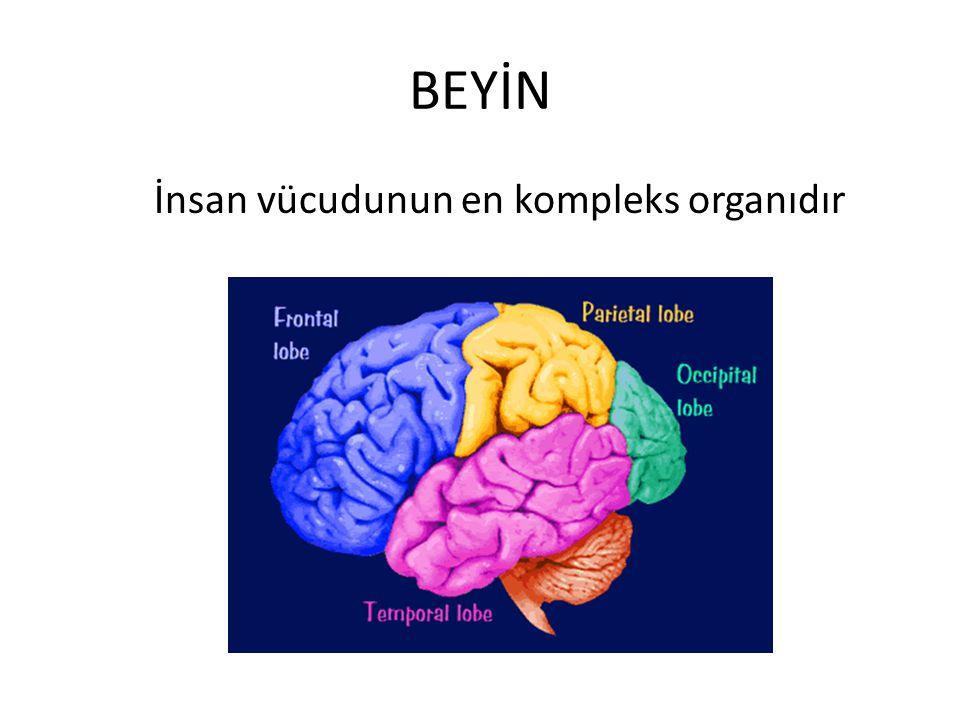 Serebral Korteks En dışta görülen bölümdür Akıl, bilinç, dil, düşünme yeteneği, akıl yürütme ve hayal etme Dört Loba bölünür Yüzeyindeki kıvrımlar gyrus Girintiler sulkus