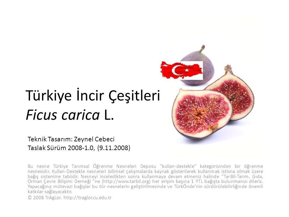 """Türkiye İncir Çeşitleri Ficus carica L. Bu nesne Türkiye Tarımsal Öğrenme Nesneleri Deposu """"kullan-destekle"""" kategorisinden bir öğrenme nesnesidir. Ku"""