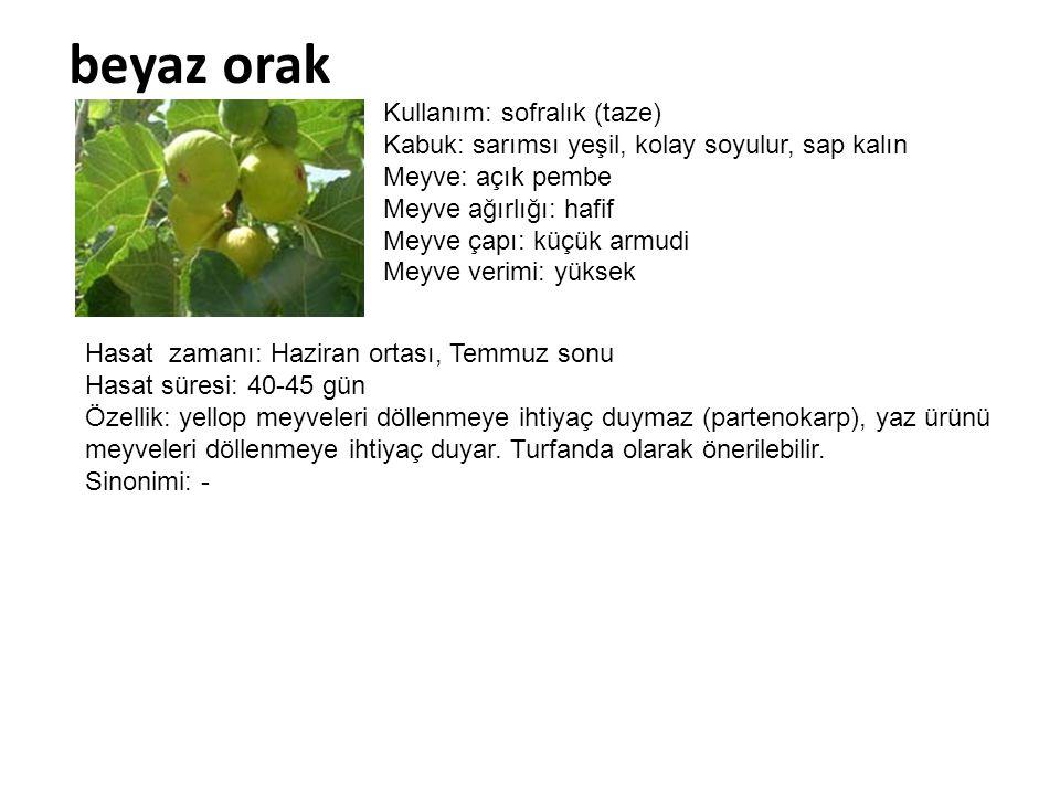 beyaz orak Kullanım: sofralık (taze) Kabuk: sarımsı yeşil, kolay soyulur, sap kalın Meyve: açık pembe Meyve ağırlığı: hafif Meyve çapı: küçük armudi M