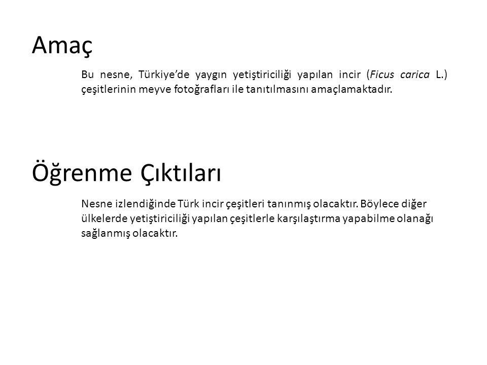 Amaç Bu nesne, Türkiye'de yaygın yetiştiriciliği yapılan incir (Ficus carica L.) çeşitlerinin meyve fotoğrafları ile tanıtılmasını amaçlamaktadır. Öğr