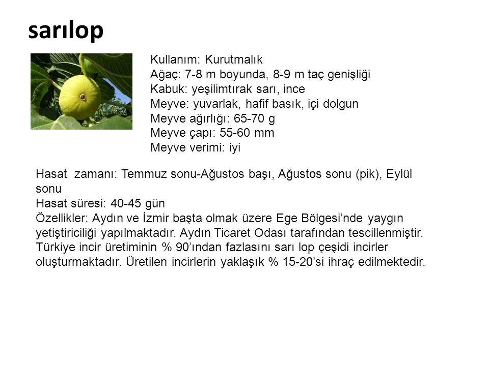 sarılop Kullanım: Kurutmalık Ağaç: 7-8 m boyunda, 8-9 m taç genişliği Kabuk: yeşilimtırak sarı, ince Meyve: yuvarlak, hafif basık, içi dolgun Meyve ağ