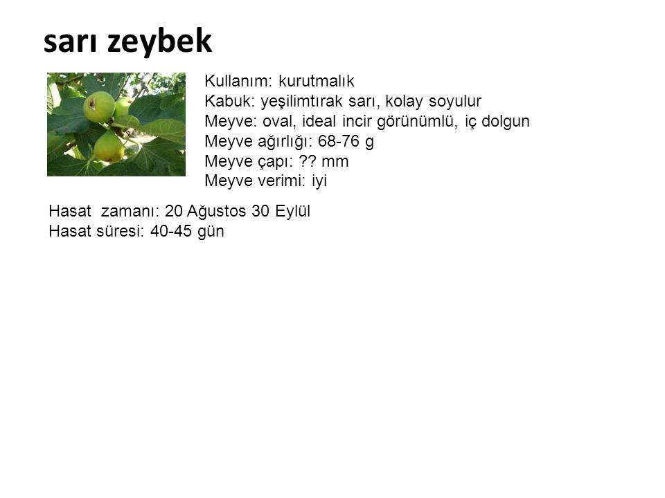 sarı zeybek Kullanım: kurutmalık Kabuk: yeşilimtırak sarı, kolay soyulur Meyve: oval, ideal incir görünümlü, iç dolgun Meyve ağırlığı: 68-76 g Meyve ç
