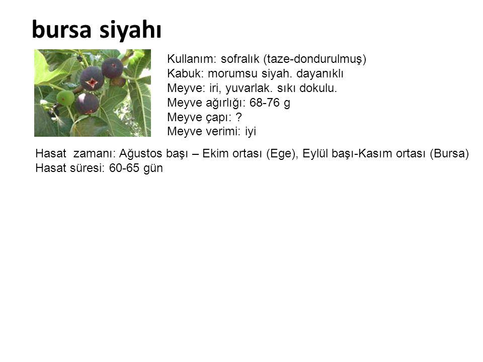 bursa siyahı Kullanım: sofralık (taze-dondurulmuş) Kabuk: morumsu siyah. dayanıklı Meyve: iri, yuvarlak. sıkı dokulu. Meyve ağırlığı: 68-76 g Meyve ça
