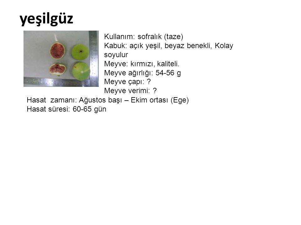 yeşilgüz Kullanım: sofralık (taze) Kabuk: açık yeşil, beyaz benekli, Kolay soyulur Meyve: kırmızı, kaliteli. Meyve ağırlığı: 54-56 g Meyve çapı: ? Mey