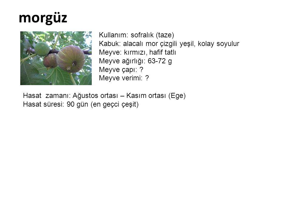 morgüz Kullanım: sofralık (taze) Kabuk: alacalı mor çizgili yeşil, kolay soyulur Meyve: kırmızı, hafif tatlı Meyve ağırlığı: 63-72 g Meyve çapı: ? Mey