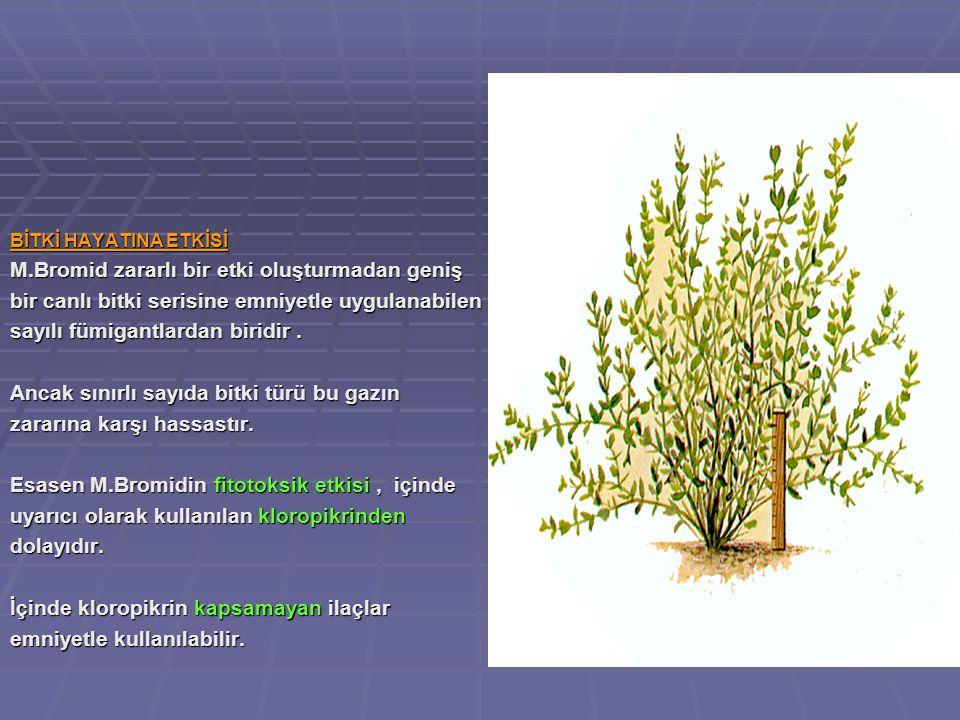 BİTKİ HAYATINA ETKİSİ M.Bromid zararlı bir etki oluşturmadan geniş bir canlı bitki serisine emniyetle uygulanabilen sayılı fümigantlardan biridir.