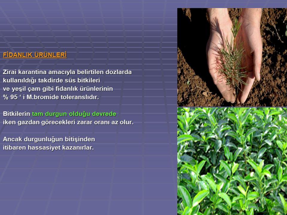 FİDANLIK ÜRÜNLERİ Zirai karantina amacıyla belirtilen dozlarda kullanıldığı takdirde süs bitkileri ve yeşil çam gibi fidanlık ürünlerinin % 95 ' i M.bromide toleranslıdır.