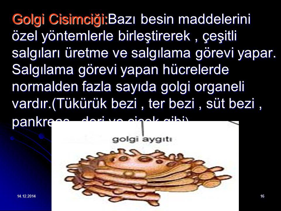 14.12.201416 Golgi Cisimciği:Bazı besin maddelerini özel yöntemlerle birleştirerek, çeşitli salgıları üretme ve salgılama görevi yapar.