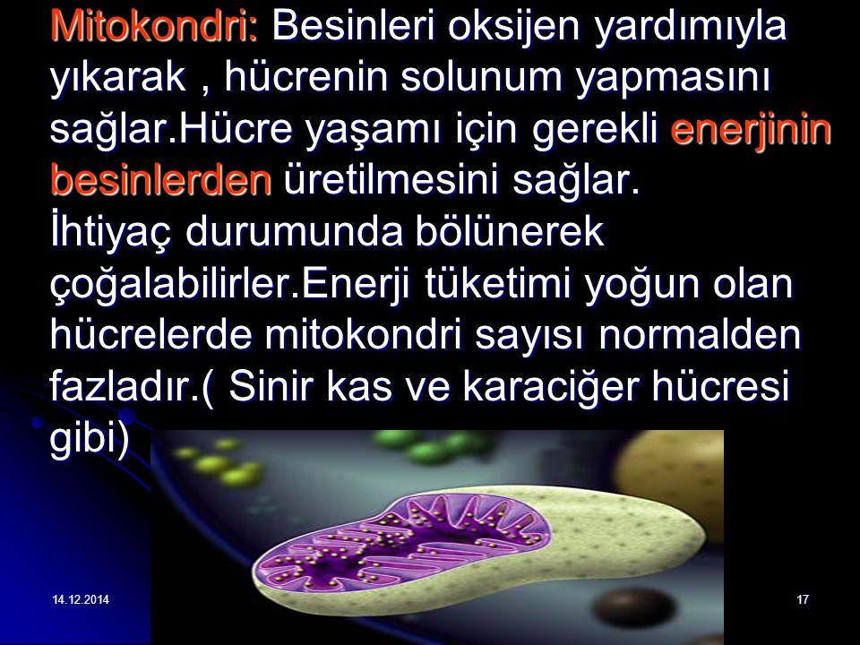 14.12.201417 Mitokondri: Besinleri oksijen yardımıyla yıkarak, hücrenin solunum yapmasını sağlar.Hücre yaşamı için gerekli enerjinin besinlerden üretilmesini sağlar.