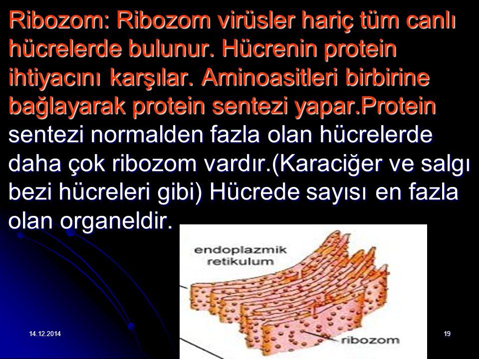 14.12.201419 Ribozom: Ribozom virüsler hariç tüm canlı hücrelerde bulunur.