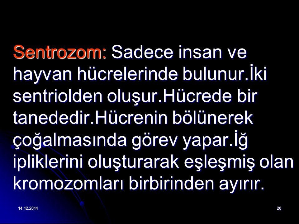 14.12.201420 Sentrozom: Sadece insan ve hayvan hücrelerinde bulunur.İki sentriolden oluşur.Hücrede bir tanededir.Hücrenin bölünerek çoğalmasında görev yapar.İğ ipliklerini oluşturarak eşleşmiş olan kromozomları birbirinden ayırır.