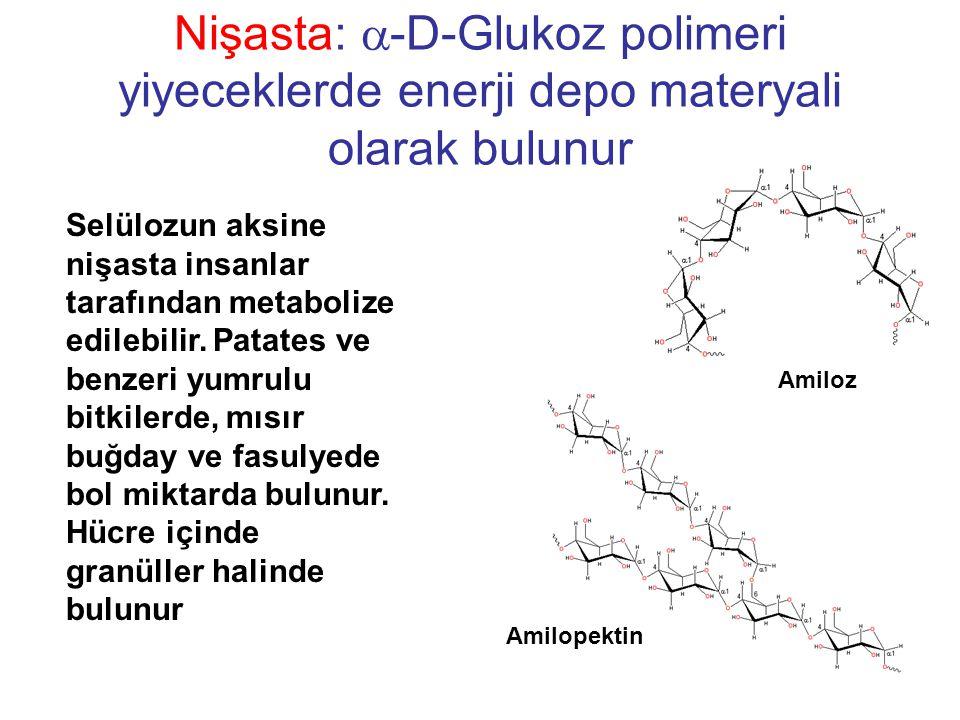 Nişasta:  -D-Glukoz polimeri yiyeceklerde enerji depo materyali olarak bulunur Amilopektin Amiloz Selülozun aksine nişasta insanlar tarafından metabolize edilebilir.