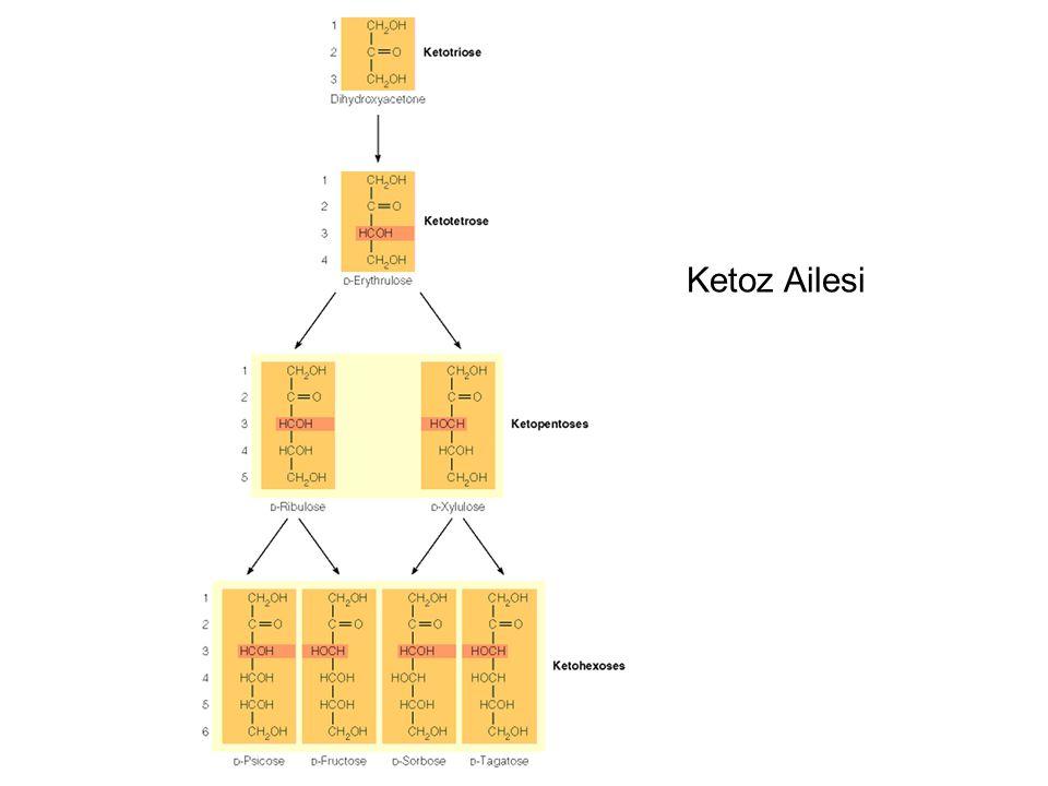 Çok sayıda monosakkaritin glikozidik bağ ile birleşmesi ile oluşur.