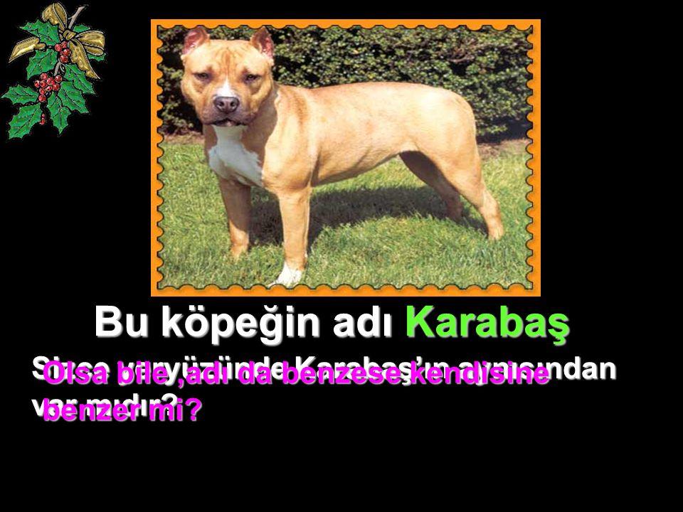 Bu köpeğin adı Karabaş Sizce yeryüzünde Karabaş'ın aynısından var mıdır? Olsa bile,adı da benzese kendisine benzer mi?