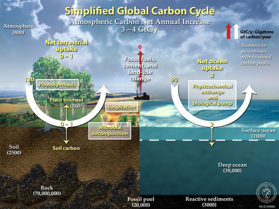 KARBONHİDRATLAR Karbonhidratlar karbon, hidrojen ve oksijenden oluşurlar.
