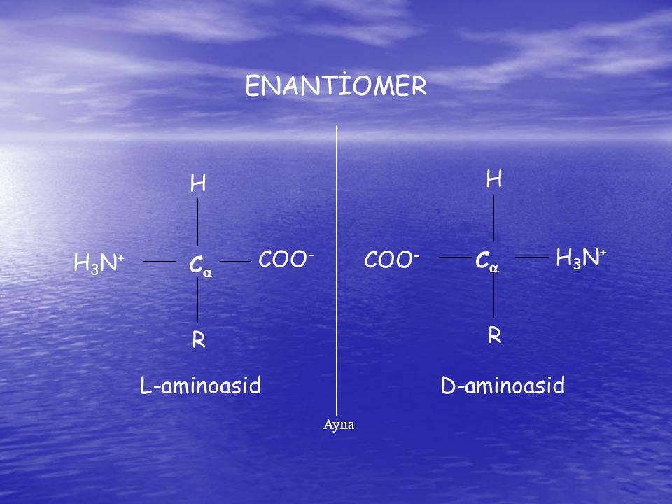 H H3N+H3N+ C  COO - R H H3N+H3N+ C C R L-aminoasidD-aminoasid Ayna ENANTİOMER
