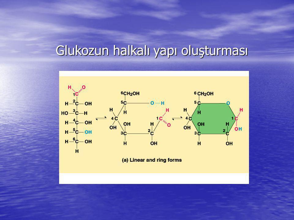 Glukozun halkalı yapı oluşturması