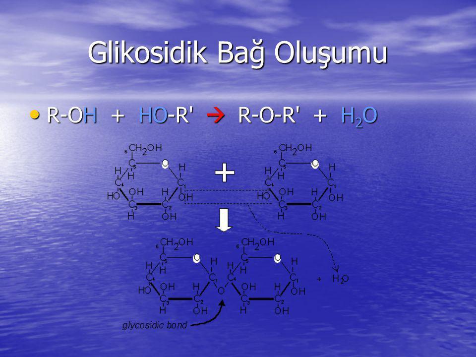 Glikosidik Bağ Oluşumu R-OH + HO-R'  R-O-R' + H 2 O R-OH + HO-R'  R-O-R' + H 2 O