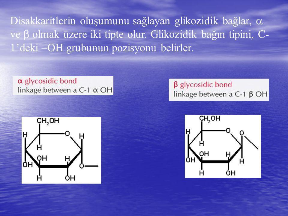 Disakkaritlerin oluşumunu sağlayan glikozidik bağlar,  ve  olmak üzere iki tipte olur. Glikozidik bağın tipini, C- 1'deki –OH grubunun pozisyonu bel